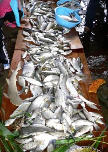魚巻き集会2