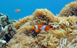 バラス島には色々な魚やサンゴ礁が