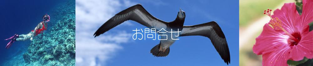 西表島 シュノーケル・カヤックツアー クロスリバー お問合せ