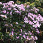 西表島の春のお花