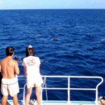 イルカウォッチングIN!バラス島ツアー