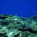 西表島の海は抜群の透明度です!