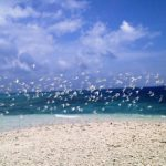 今日はお昼からバラス島へ!