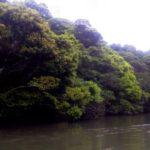 新緑の西表島