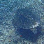 透明度の高い西表島での体験ダイビング!!