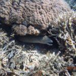 ウミガメと一緒に泳ぎましょ〜西表島バラス島シュノーケリング!!