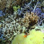 西表島で海ガメとシュノーケリング