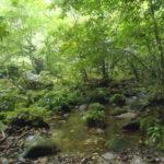 ☆ピナイサーラの滝1日コースの流れとオススメ☆