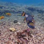 西表島海の生き物たち