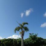 ピナイサーラの滝壺&バラス島シュノーケル日和