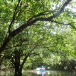 夏休み本番!川&海満喫コースと最近のバラス島