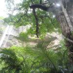 亜熱帯ジャングル!ピナイサーラ滝つぼ&シュノーケル