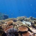 透明度が最高です!西表島バラス島シュノーケル