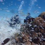 魚が多過ぎる件。西表島